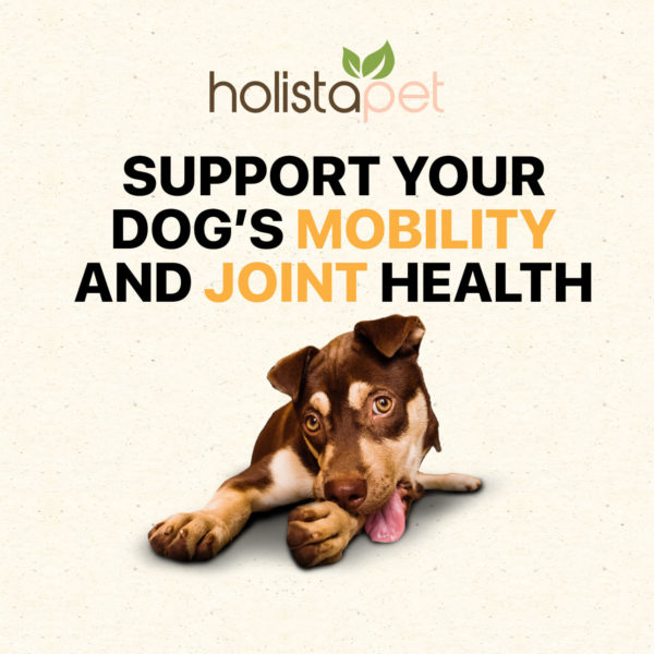 holistapet hemp dog treats support your dogs mobility and joint health